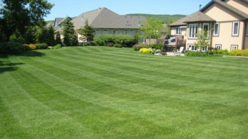 Freshly Mowed Lawn in Lawrence, Kansas