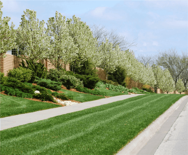 Lawn & Tree Treatment Services in Lawrence, Kansas