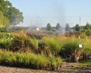 Tree Farm in Lawrence, KS