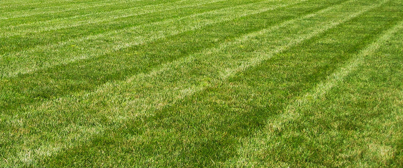 Lawn Care Maintenance In Lawrence Ks