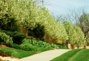 Trees and Shrubs in Lawrence